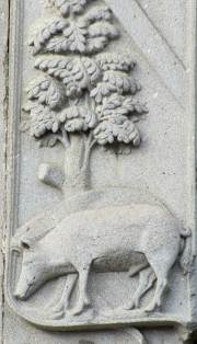 Pig beneath an oak tree
